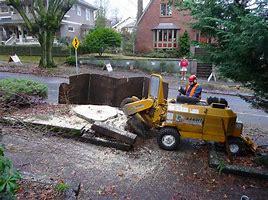 stump removal SA